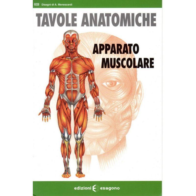 Tavole anatomiche - Apparato muscolare - Scheda