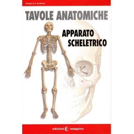 Tavole anatomiche - Apparato scheletrico - Scheda